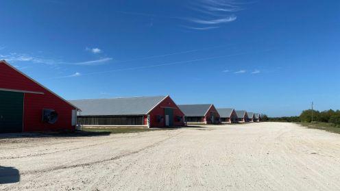 Bán trại gà 8 chuồng ở Groesbeck, Texas